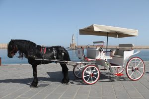 luxury carriage with black horse